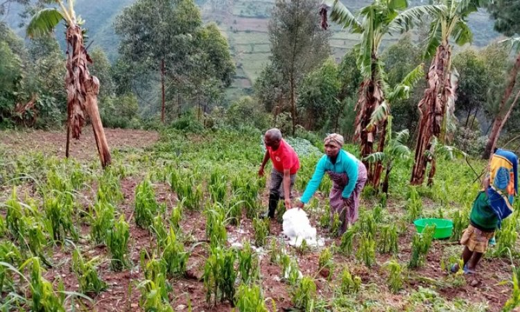 Over 186 people to face  hunger after hailstorms destroys crops in Kisoro district